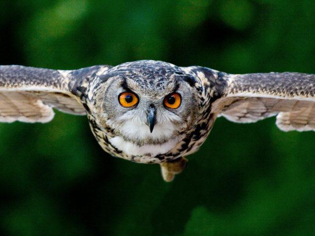 The Wisdom of an Owl